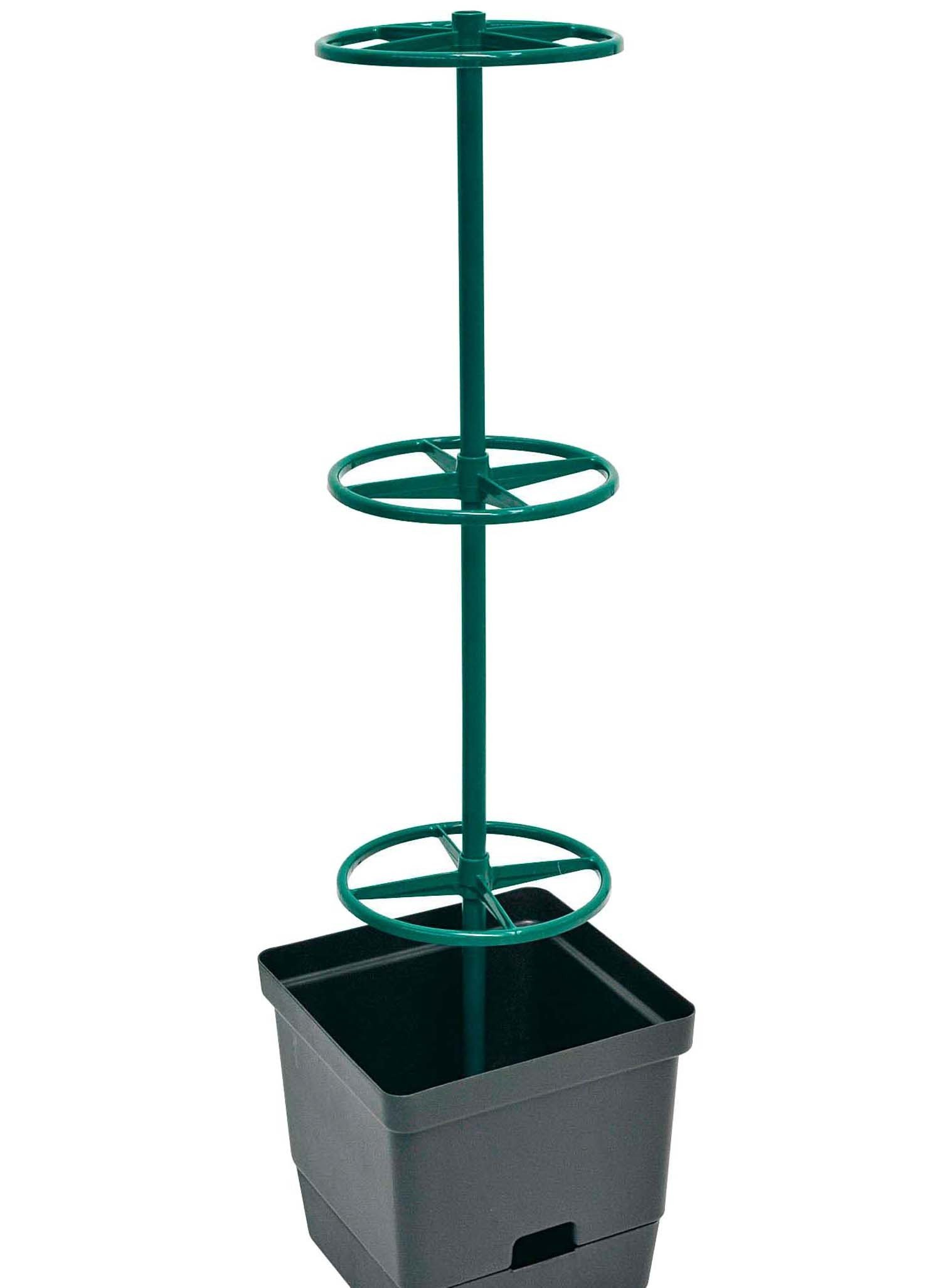 Kletterpflanzen 28x28cm H107cm - 2 - Ronja.ch