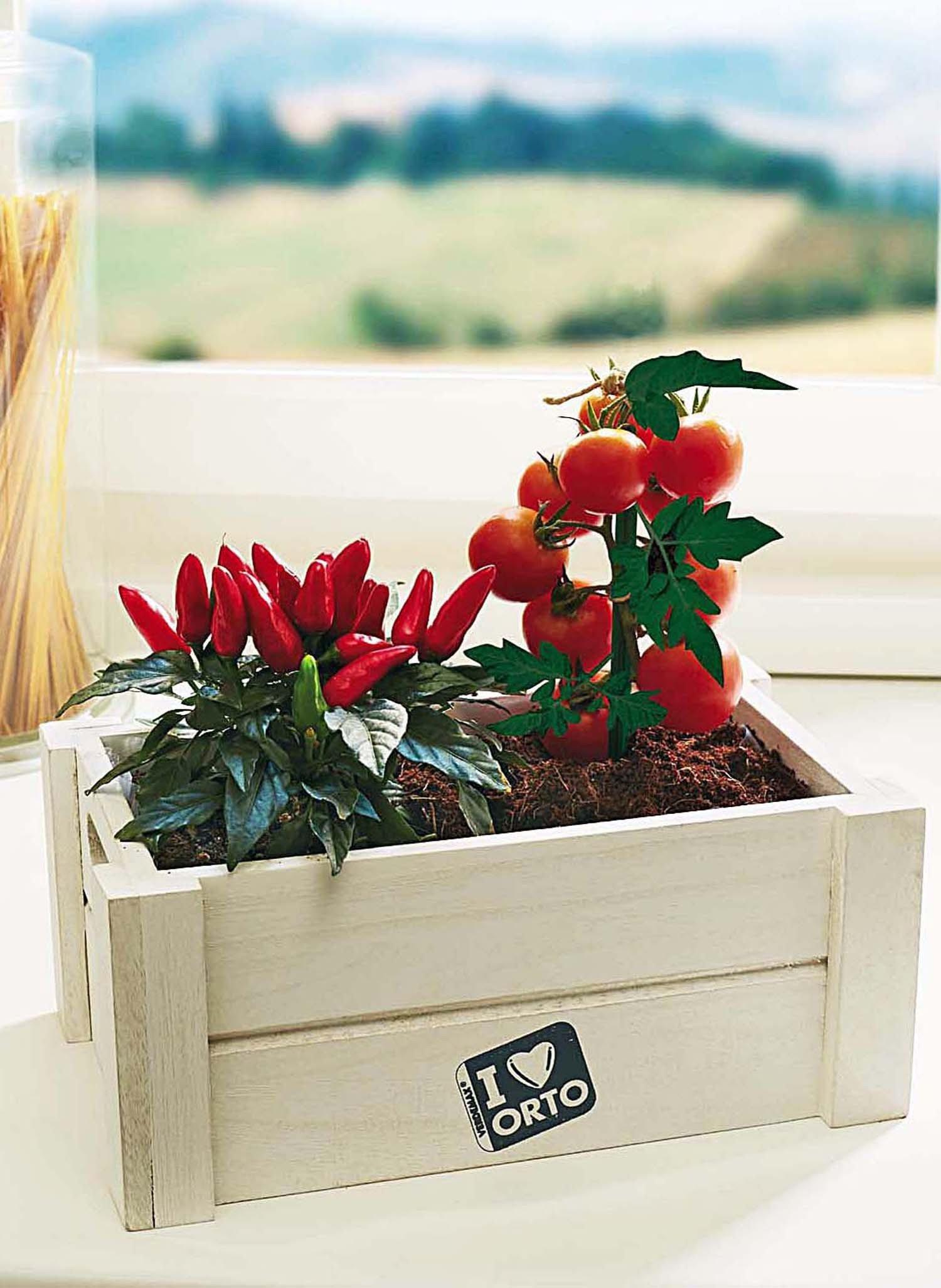 Kräuter-Box,Tomaten/Chillis
