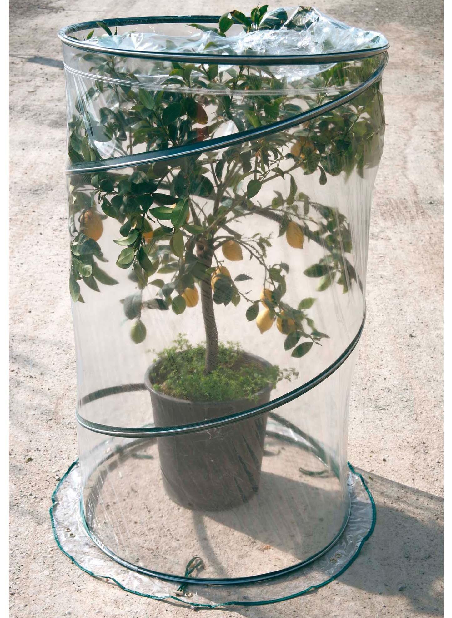 Serre pour arbre-O/70,H110cm