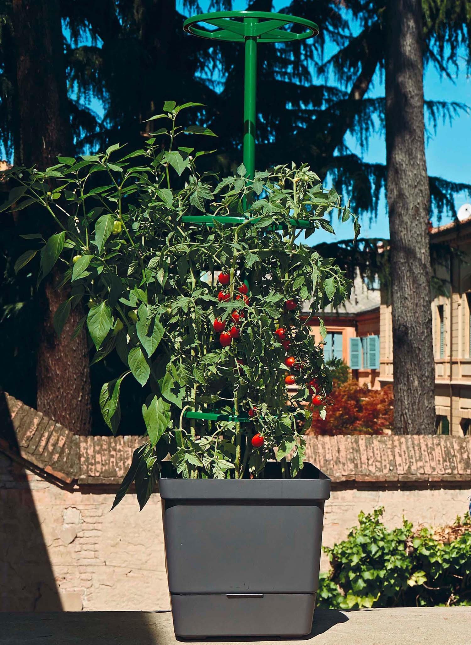 Kletterpflanzen 28x28cm H107cm
