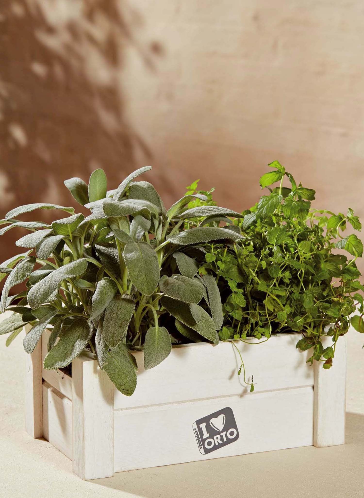 Box-Orto,Salvia/Menta