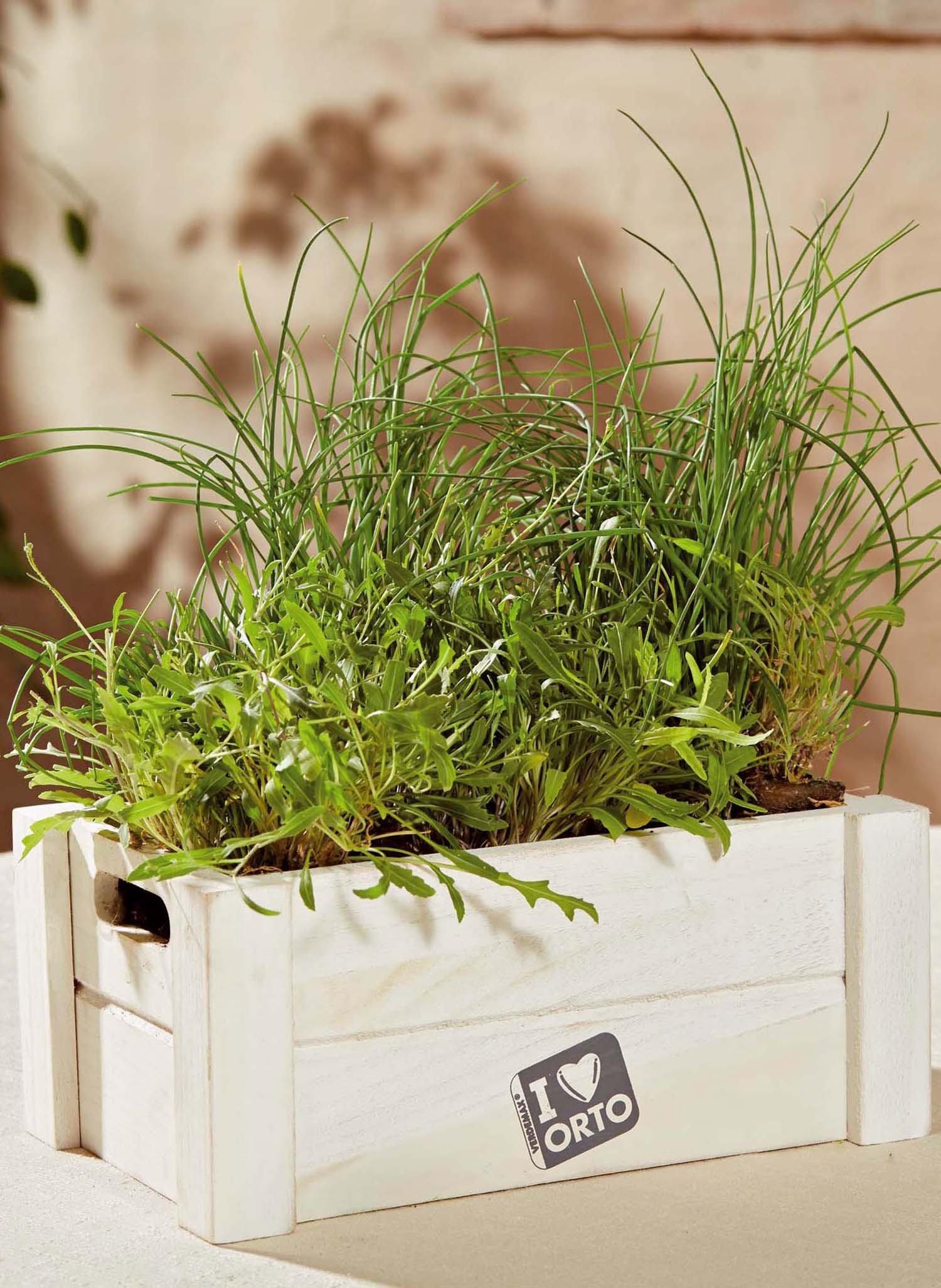 Box-Orto,Rucola/Erba cipollina